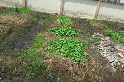 Vườn rau sạch của bé